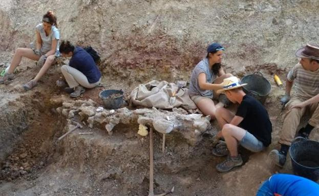 Excavación en el yacimiento de Torrelara. /BC